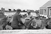 Farmers use donkeys to transport sand and cement up Croagh Patrick for work on the exterior of the Oratory. Loading the donkeys at the McNeill house..15-17.05.1962