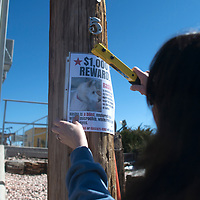 Debbie Duck posts a flier for the missing dog Rasha on a lamp post along Boyd Avenue in Gallup Wednesday.