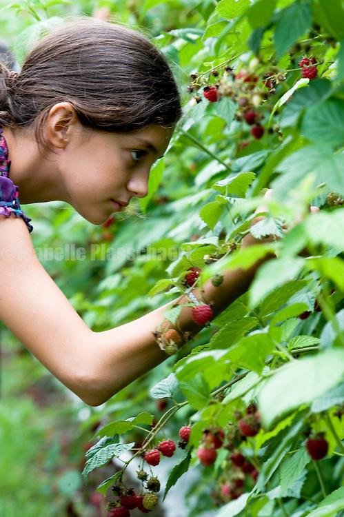 picking raspberries at Garsons in Esher