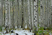 McClure Pass, south of Redstone, offers beautiful stands of aspen trees.