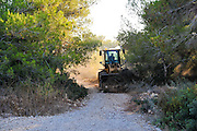 Forester clears a fire path in a pine tree forest Photographed in Israel