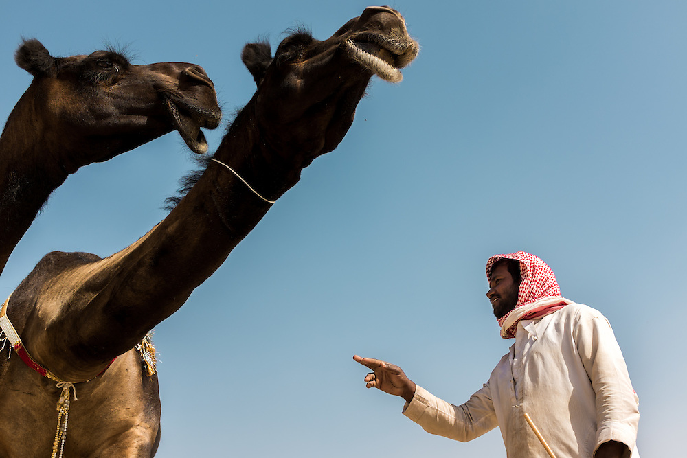 Camel Beauty Contest during the Al Dhafra Festival near Abu Dhabi.