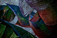 An abstract of banana leaves, reminiscent of colorful sails.