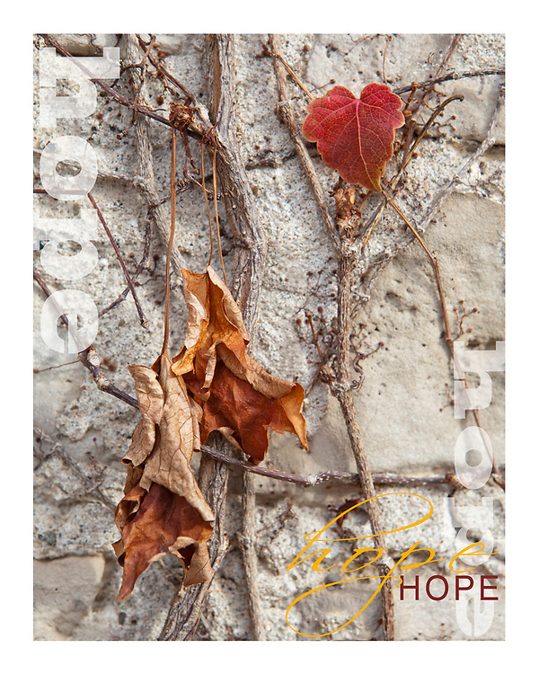 with Jesus there is LIFE and a life of HOPE. Without Jesus we are simply handing on withered up waiting to decay, as illustrated through this photograph.