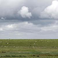Nederland Coudorpe gemeente Borsele 19 juni 2010 20100619       ..Serie landschappen provincie Zeeland. Zuid Beverland, Polderlandschap, schapen grazen op een dijk aan de westerschelde. , weiland. Landscape, wijdheid, wijds, wijdsheid, wit, witte, wolk, wolken, wolkenpartij, zeeland, zeeuws vlaanderen, zeeuws-vlaanderen, zeewering, zo vrij als een vogel, zware, zwitserleven gevoel   ..Foto: David Rozing
