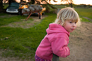 Almost-three-year-old Rachel Stute climbs on a fence railing as her mother, Michele Stute, checks on sheep grazing in a nearby field during sunset at the Stute family farm during sunset in East Troy, Wis., on May 13, 2003. On the 159-acre farm, Michele Stute raises more than 100 Clun Forest sheep and her husband Jim Stute tends to soybeans, corn, wheat and hay crops in addition to his full-time state position as an agricultural extension specialist.