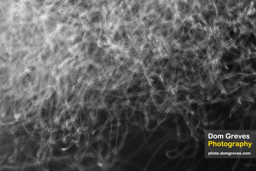 Midge swarm in motion over water. Surrey, UK.