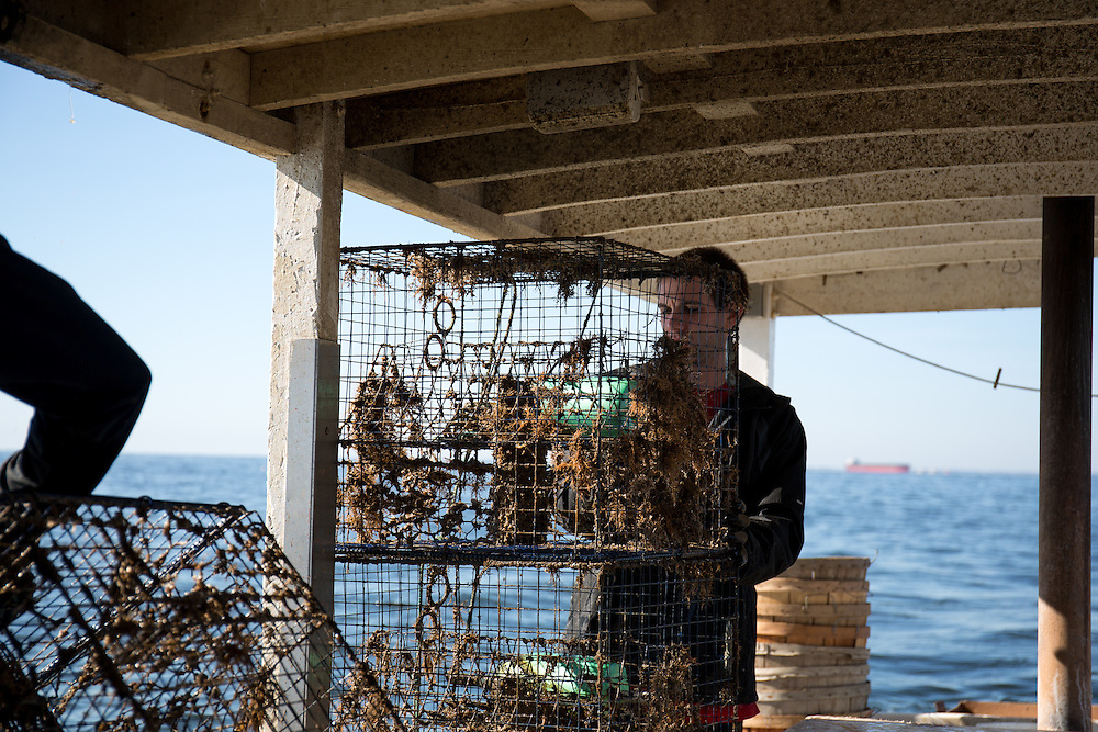 Chris Shipley checks crab traps recently pulled up from the bay | October 11, 2015