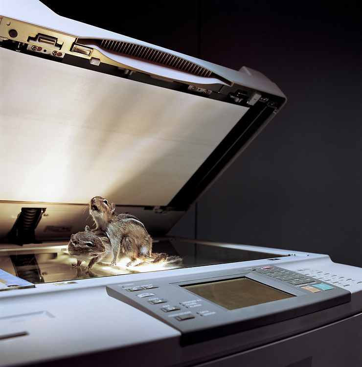 Two stuffed chipmunks in mating position on top of photocopier