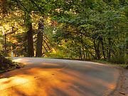 Sunset shadows on SE Salmon Way, Mount Tabor Park, Portland, Oregon, USA.