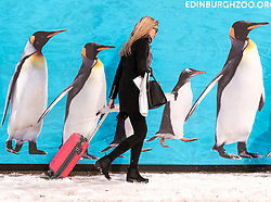 The Beast from the East, Storm Emma hit Edinburgh overnight and has left transport links decimated and many of the shops on the famous Princes Street closed for the day.<br /> <br /> Pictured: Pedestrians pass by an advertisement for Edinburgh Zoo on Princes Street