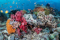 Colorful Reef top, with Hard/Soft Corals, and Reef Fish<br /> <br /> Shot in Indonesia