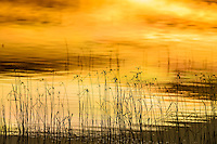 Winter grasses in water silhouetted at sunset, reflections; Bosque del Apache NWR., NM