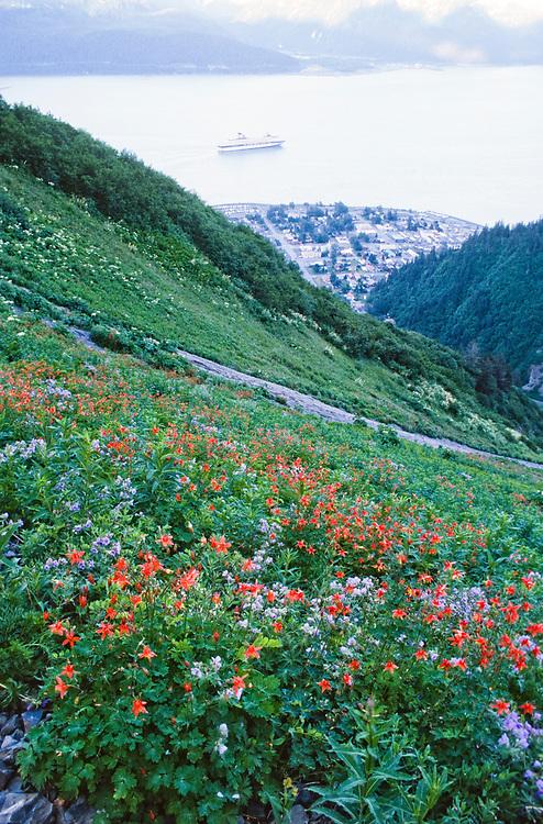 Alaska. Seward. Mt Marathon and wildflowers blooming high above Seward.
