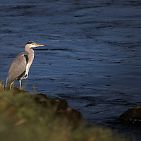 Scone Estates Salmon Fishing