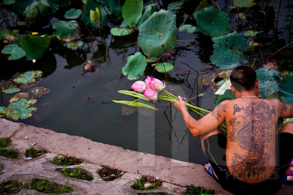 A man collects lotus flowers from a boat at West Lake, Hanoi, Vietnam.