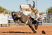 26 NOVEMBER 2011 - CHANDLER, AZ:    JASON MINIC gets bucked off during the bareback bronc riding competition at the Grand Canyon Pro Rodeo Association (GCPRA) Finals at Rawhide Western Town in west Chandler, AZ, about 20 miles from Phoenix Saturday. The GCPRA Finals is the last rodeo of the GCPRA season. The GCPRA is a professional rodeo association based in Arizona.     PHOTO BY JACK KURTZ