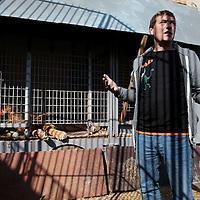 Frankrijk Lieusaint,21 mei 2015.<br /> Stichting AAP die zich inzet voor opvang en welzijn van verwaarloosde dieren waaronder diverse apensoorten haalt nu verwaarloosde 2 tijgers en 2 leeuwen op bij een failliete circus in het plaatsje Lieusaint in de buurt van Parijs om ze vervolgens een betere toekomst te geven in opvangcentrum Primadomus in de buurt van Alicante Spanje<br /> <br /> <br /> <br /> Foto: Jean-Pierre Jans