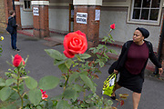 Seen through (the Labour Party symbol) red roses, voters arrive and leave the polling station on the morning of the UK 2017 general elections outside St. Saviour's Parish Hall in Herne Hill, Lambeth, on 8th June 2017, in London, England.