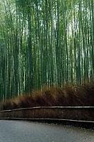 Arashiyama bamboo forest morning scenery in Kyoto, Japan.