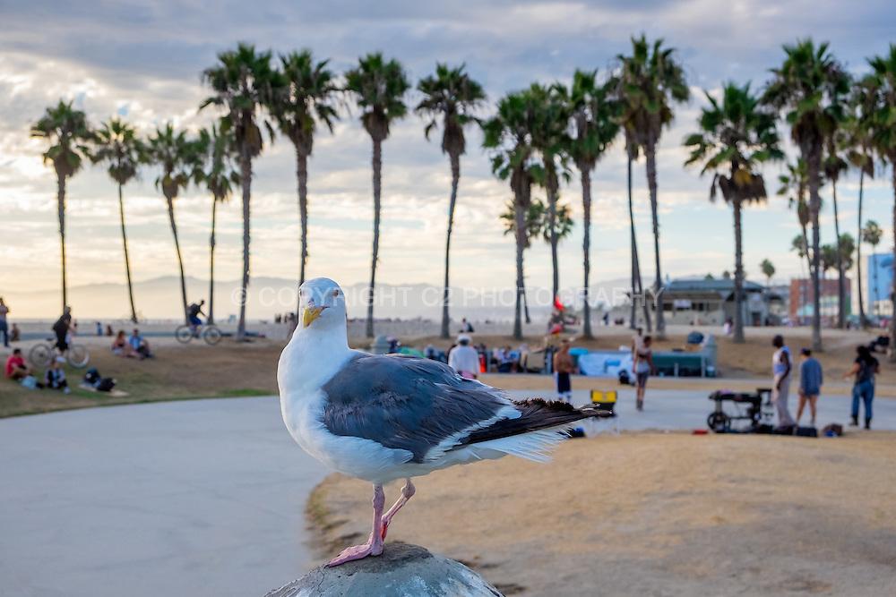 Venice Beach - Los Angeles, California.