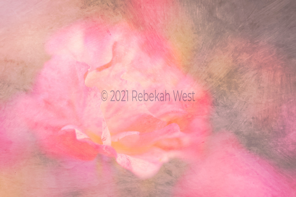Abstract pink rose petals opening like a splash,range of pinks from geranium to chalky baby pink, rosey form covers most of a horizontal field centered on the left half and reaching almost from top to bottom and from left to halfway across right sides, background strokes of pinks, greys, ochre, flower art, feminine, millennial pink, high resolution, licensing, 5616 x 3744