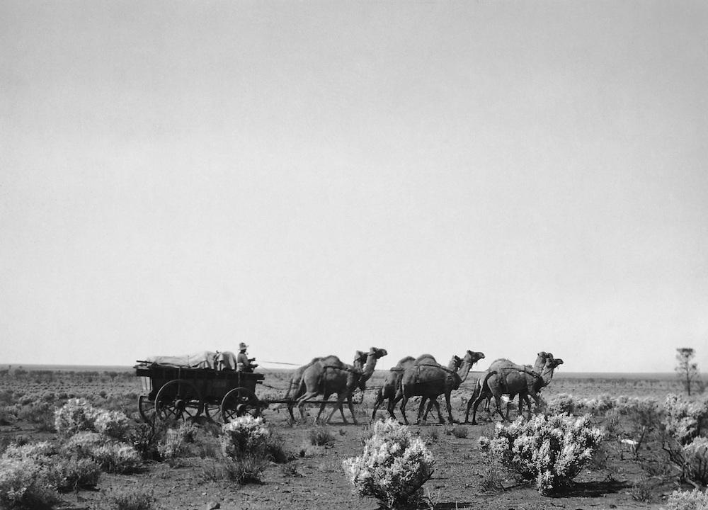 Camel Drawn Wagon, Central Australia, 1930