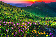 Impresive mountain landscape with pink flowers