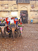 Elephants in a courtyard below the Amber Palace, Amer, Rajasthan