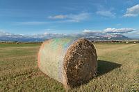 Hay bales Augusta Montana