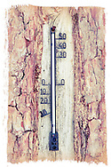 Thermometer attached to Scots pine, Finland