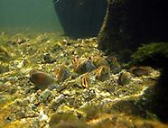 Molluscs, Leeches & Worms