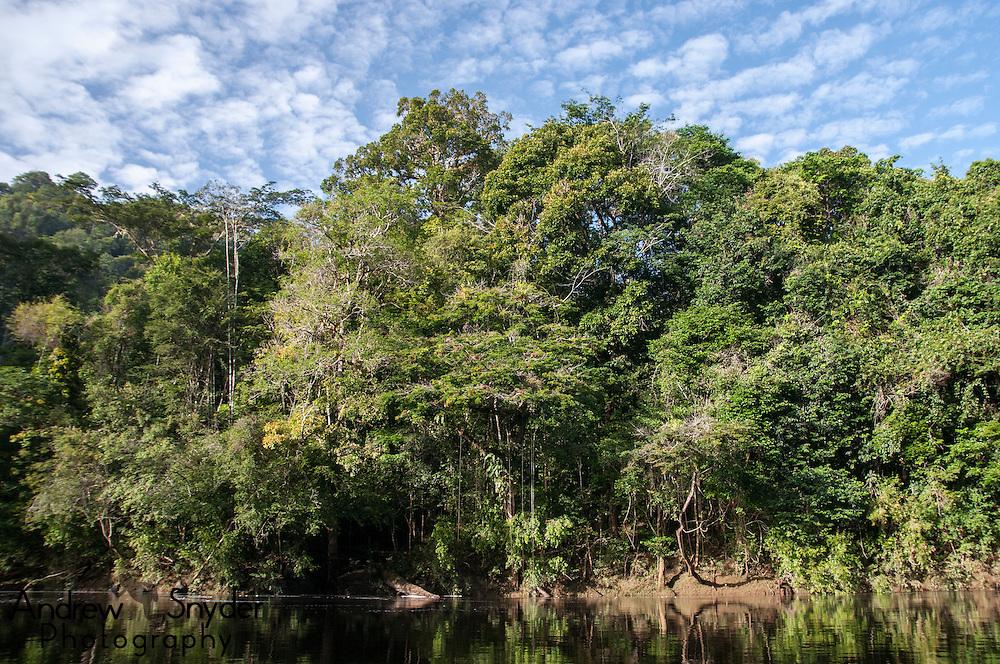Rainforest along the Potaro River, Guyana.