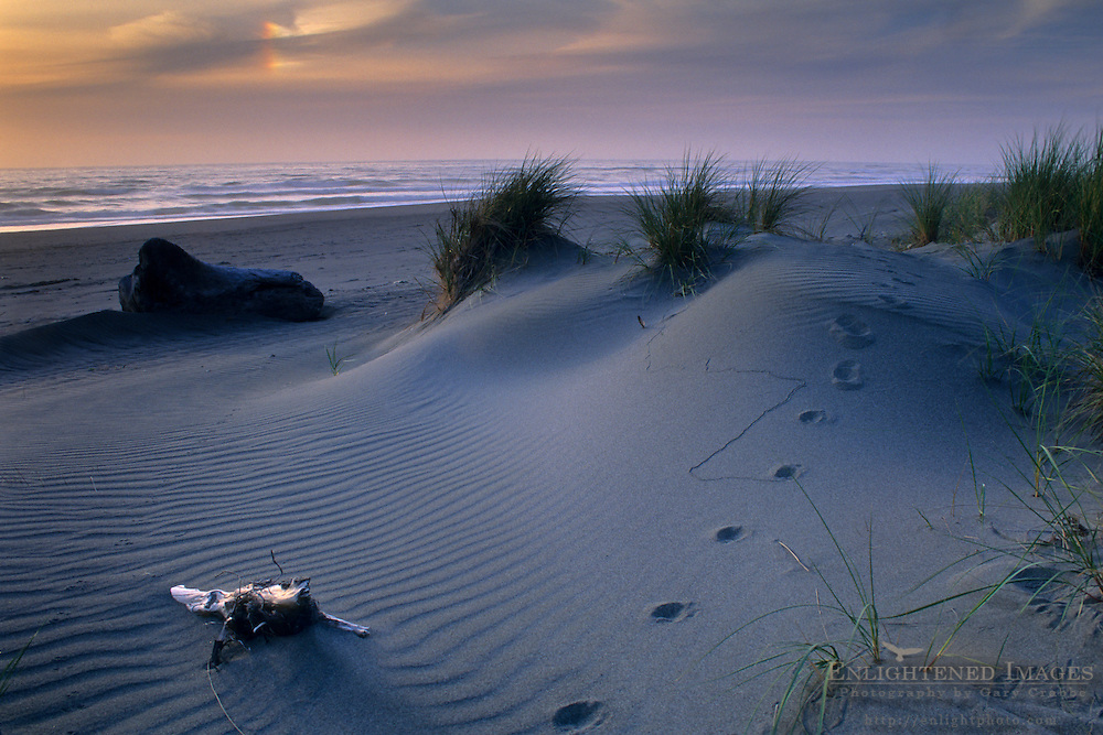 Sunset at Gold Bluffs Beach, Prairie Creek Redwoods State Park, Humboldt County, CALIFORNIA
