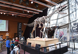 The skeleton of a Theropod dinosaur before the start of an auction on the Eiffel Tower. The 8,7 metre long dinosaur skeletion was discovered in the US state Wyoming with French data from the auction house Aguttes. The estimated price lies between 1,2 and 1,8 million euros. Paris, France, June 4, 2018. Photo by Alain Apaydin/ABACAPRESS.COM	•	Dinosaure •	Squelette •	Vente aux encheres