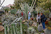 Visitors at the cactus Garden in Kibbutz Ein Gedi, on the shores of the Dead Sea, Israel