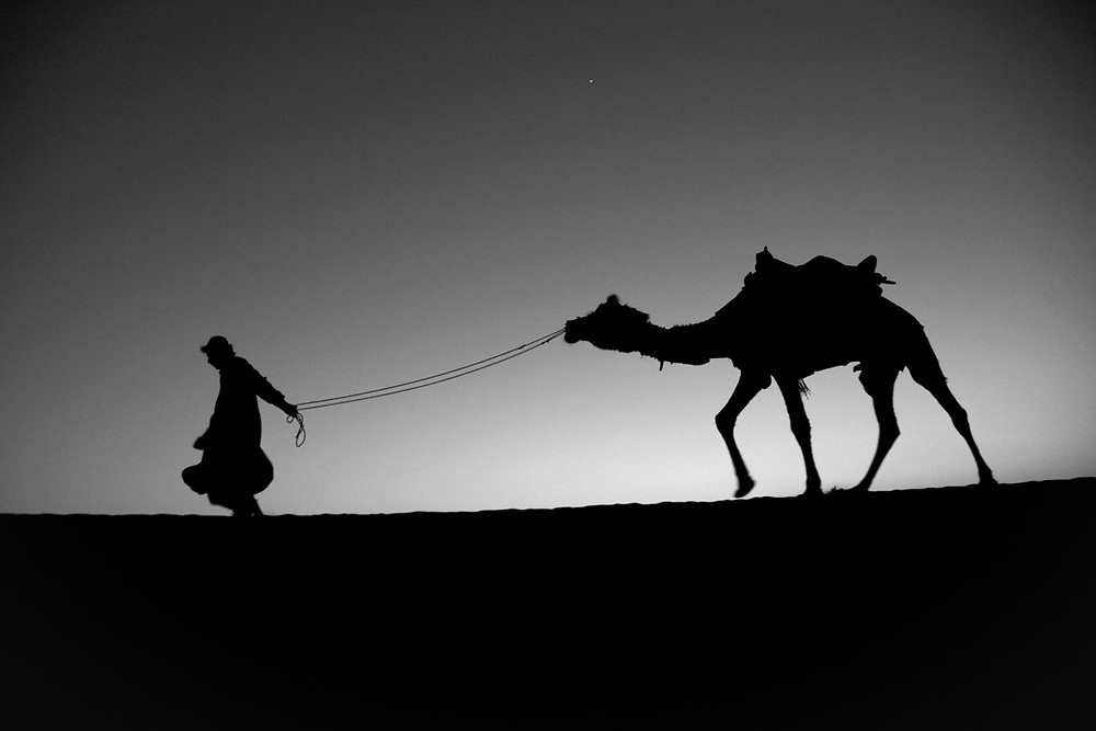 Thar Desert, India. Before the fall of the night, a nomadic shepherd from Rajasthan is returning to the camp with his camel.<br />