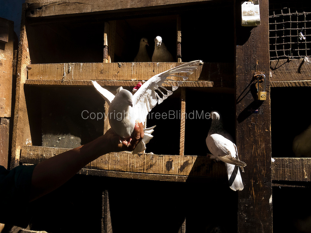 The pigeon fancier - Newham Square