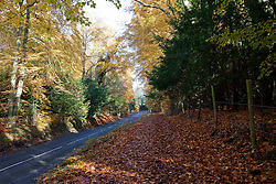 © Licensed to London News Pictures. 11/11/2012. Whitchurch-on-Thames, Reading, Berkshire. Beech trees in full autumn colours on Remembrance Sunday. Photo credit : Rebecca Mckevitt/LNP