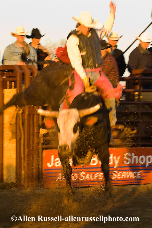 Bull Rider, Miles City Bucking Horse Sale, Montana, blurred motion