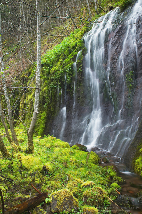 Waterfall, Gifford Pinchot National Forest, Washington