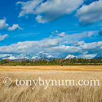 big meadows livingston range fall colors glacier national park north fork valley
