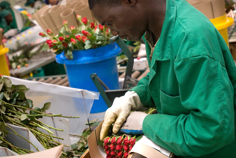 Kenya. Lake Naivasha. Sainsbury's Local Heros visit Oserian Farm to see how the social premium generated by sales of the supermarket's Fairtrade roses via World Flowers has been spent on community Projects..Photo show the group visiting the Oserian farm to see how the flowers are grown and packed..