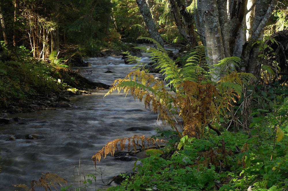 Mountain brook Barsa Grosetului, National Park Piatra Craiului, Transylvania, Southern Carpathians, Romania