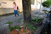 Belo Horizonte_MG, Brasil...Raizes de arvores na calcada da esquina das ruas Timbiras e Piaui no bairro Funcionarios...The tree roots in the sidewalk of the street corner between Timbiras and Piaui in Funcionarios neighborhood...Foto: LEO DRUMOND /  NITRO