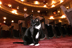 Theatre Cats - West End - 2000
