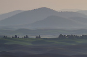 Morning in the Palouse