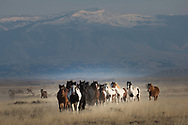 Led by the mare, Talladega Nights, a band of wild horses reacts to Wyoming's high winds by doing what they do best, galloping through the range.