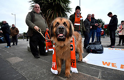 A Blackpool fan puts an Oyston Out scarf around his dog prior to the beginning of the Emirates FA Cup, third round match at Bloomfield Road, Blackpool.