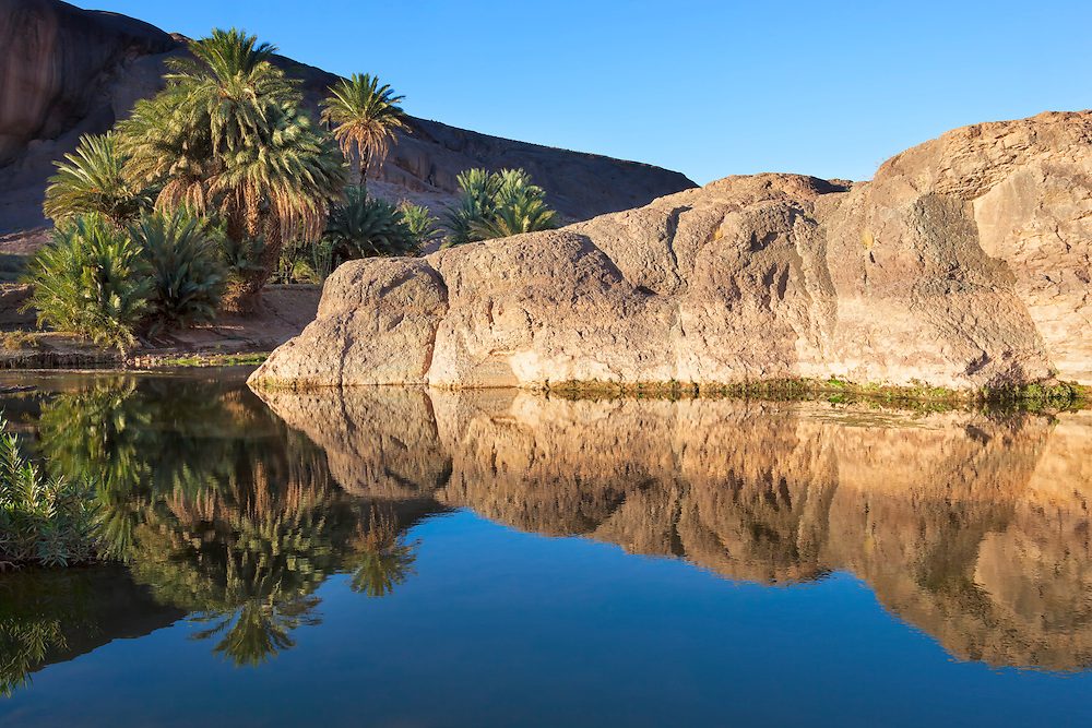 Mountain and date palms with reflections in river, Fint Oasis, Morocco.